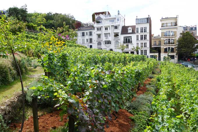 montmartre vineyard 2