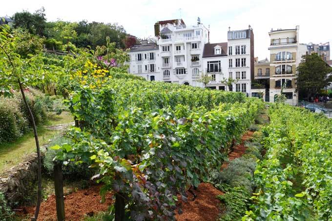 montmartre vineyard 2